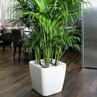 large indoor planters ideas  foter