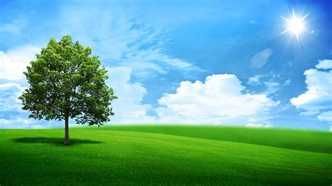 green nature landscape daywallpaper