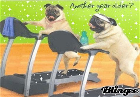 pug ecards birthday pugs picture 6918519 blingee
