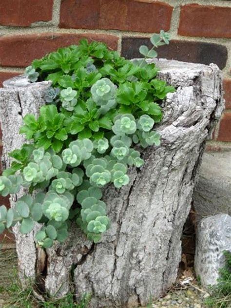 decorazioni con i fiori decorazione tronco 20 idee per decorare un tronco con i fiori