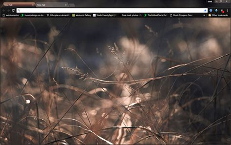 theme chrome nature brown macro nature chrome theme hindgrapha
