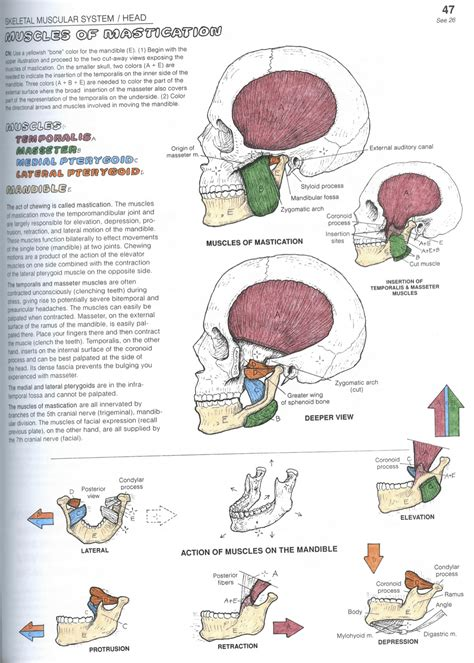 anatomy coloring book kapit what s up with your or anatomy scans 1 0