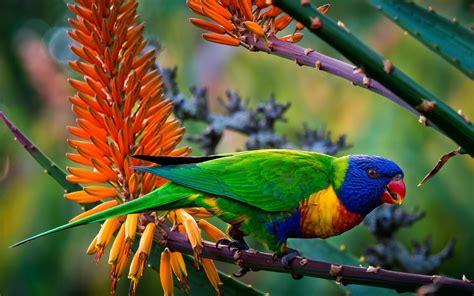 wallpaper full hd parrot multi color parrot 4k full hd desktop wallpaper hd