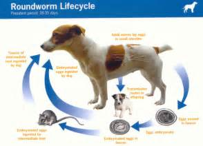 common symptoms of dogs with round worms dog breeds picture