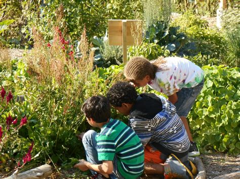 In The Garden And More Cultivate Health Initiative Helps The School Garden