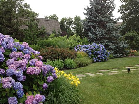 Landscape Pictures With Hydrangeas Htons Hydrangeas Style Landscape New York