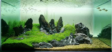 design aquascape iwagumi aquatic eden aquascaping aquarium blog