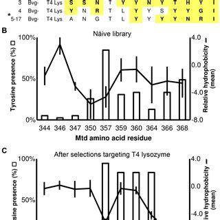 bordetella phage expresses  distal tail fibers   mtd  scientific diagram