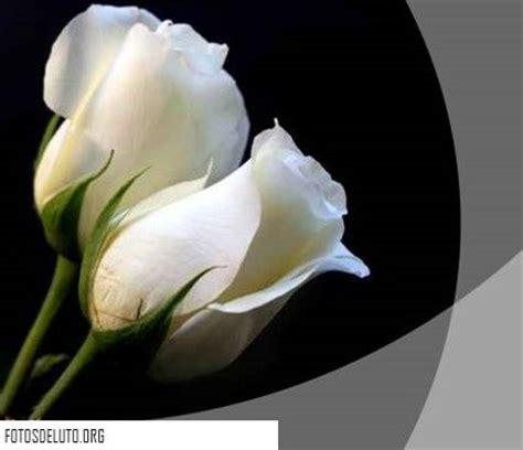 imagenes de luto rosas m 225 s de 25 ideas incre 237 bles sobre rosa de luto en pinterest