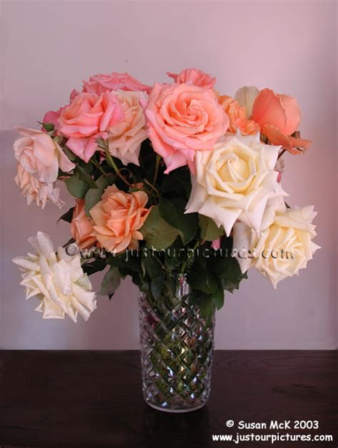 just our pictures of roses favorite pictures for