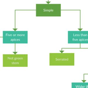 flowchart software  quickly create flowcharts creately