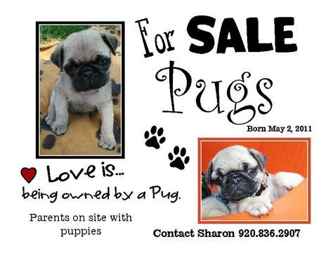 pug puppies for sale in va pug puppies for sale in virginia va breeds picture