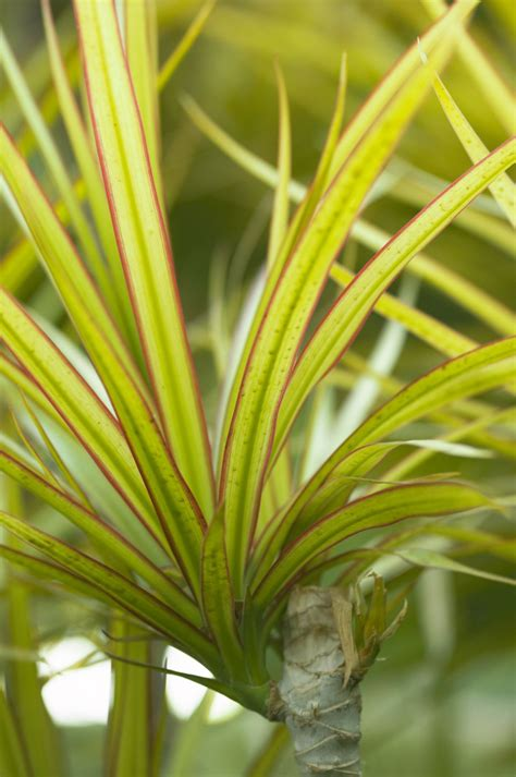 best low light 7 houseplants for low light conditions