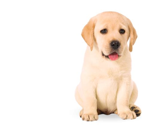 puppy png puppy png www pixshark images galleries with a bite