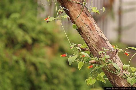 Jerusalem Botanical Gardens 17 Best Images About Hebrew On Pinterest Gardens Wedding Proposals And