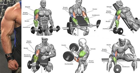 best workout program the best bicep workout program to ensure the biceps