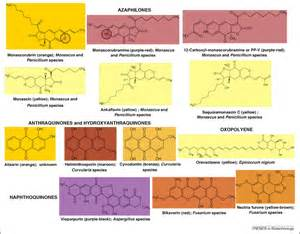 fungal polyketide azaphilone pigments as future natural food colorants trends in biotechnology