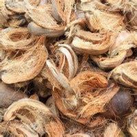 Jual Sabut Kelapa Jawa Timur jual beli kelapa tua muda harga murah berkualitas