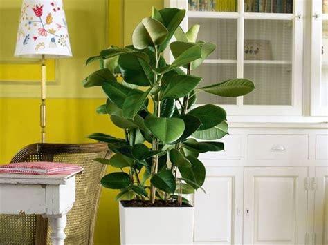 tipi di piante da appartamento pianta da appartamento piante appartamento come