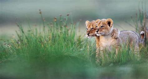 Animal Kingdom Organics Herbal Detox by 5 Lessons From The Animal Kingdom Up World
