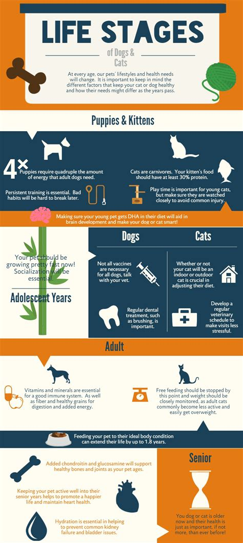 stages of puppies stages of dogs and cats new petbrosia infographic