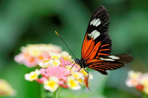butterfly wallpaper for macbook closeup butterfly wallpaper macro zoom pictures mac