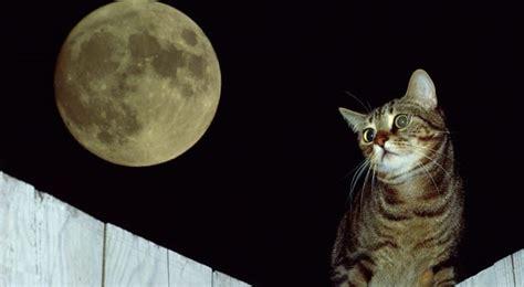 una noche un gato 8484703169 191 por qu 233 los gatos ven en la oscuridad