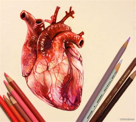 25 stunning and realistic color pencil drawings by morgan