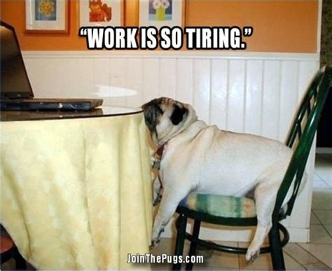pug to work join the pugs gt pug at work