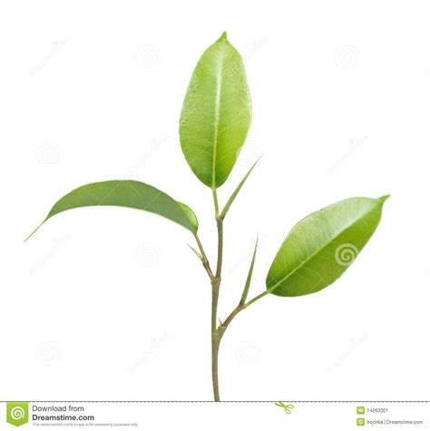 green plant leaves and stem stock image image 14263301