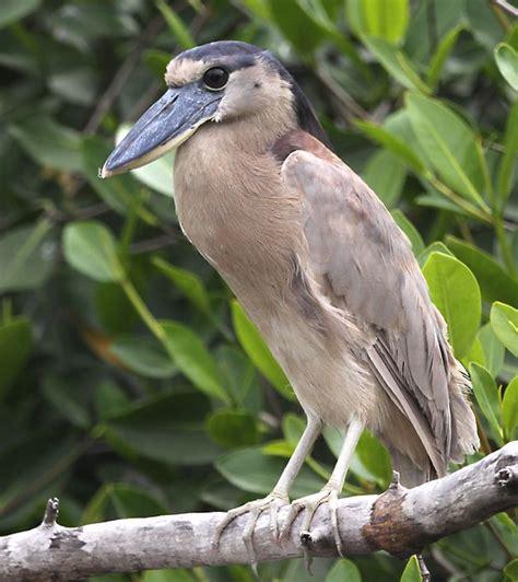 mexican bird photo galleries