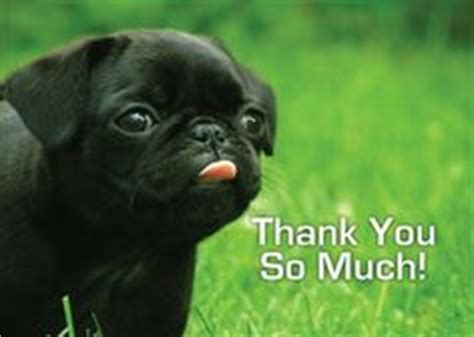 pug saying thank you 1000 images about oh the many ways to say thank you on cards thank you