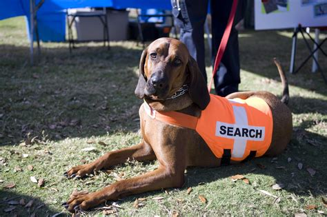 puppies and rescue shelter dogs get a new lease on as disaster rescue dogs 3milliondogs