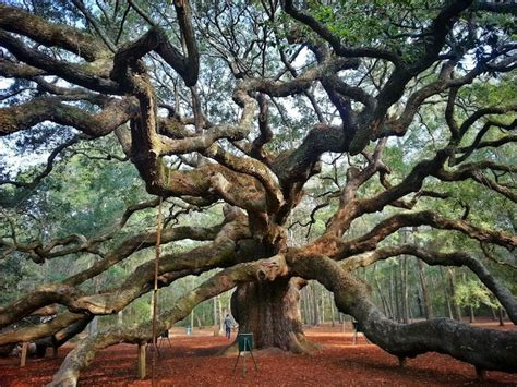 cool trees the most beautiful weird and wonderful trees in america