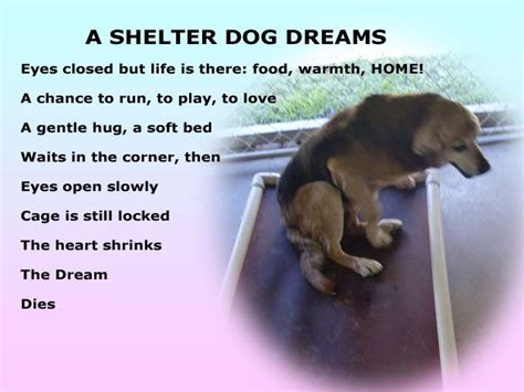 dreams about dogs 40 best images about sad stuff on miss you rainbow bridge and pets