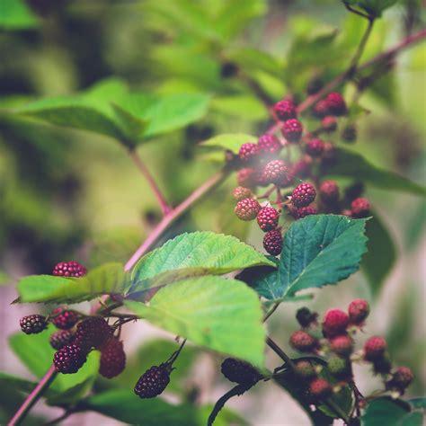 Simple Flower Swarovski For S3 S4 S5 S6 Edge Samsung Lenovo Lg papers co android wallpaper mt83 berry bush nature flower bokeh light