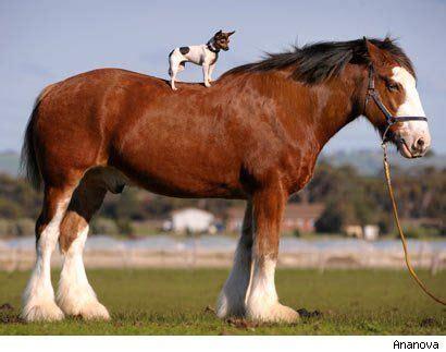 91 best giant horses images on pinterest | beautiful