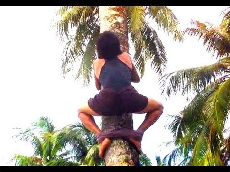 coco nut film how to climb a coconut tree and pick up coconuts