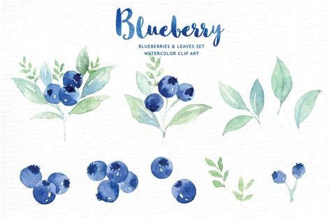 watercolor clipart blueberry watercolor clipart by everysunsun