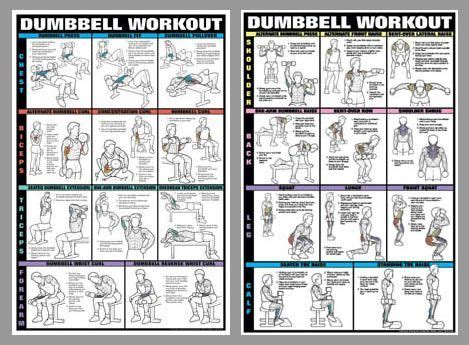 dumbbell workout 2 poster professional fitness wall chart combo fitnus posters inc exercise