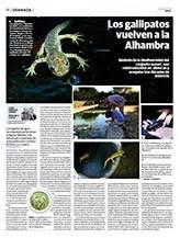 cadena trofica que pueda presentarse en la ciudad carmen de los m 225 rtires anfibios
