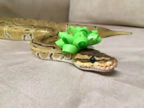 27 best reptiles and hibians images on pinterest cute snakes google search animals pinterest animal