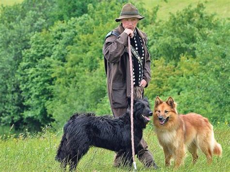 alt deutsche hutte hond gut herbigshagen wetth 252 ten fordert mensch und tier