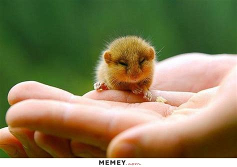 hamster memes funny hamster pictures memey com