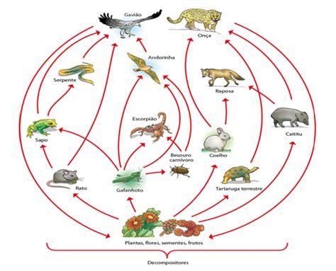 cadenas alimentarias ejemplos para niños coevolu 231 227 o e sua compreens 227 o no contexto de redes tr 243 ficas