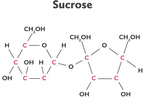 sucrose structural diagram carbon s central big picture