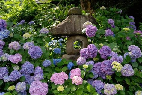 Backyard Flowers by 15 Beautiful Backyard Ideas For Hydrangea Shrubs Blending