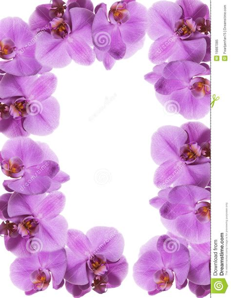 orchideen gestell orchid frame royalty free stock photo image 19887085