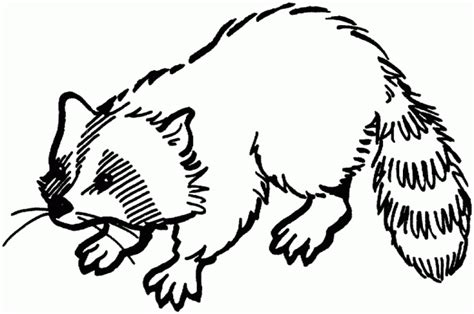 printable raccoon images redirecting to http www sheknows com parenting slideshow
