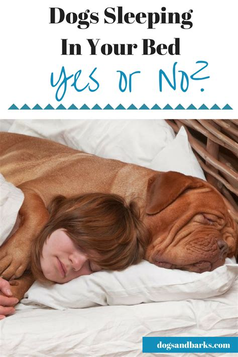 where should my puppy sleep should dogs sleep in your bed care made simple beds and costumes
